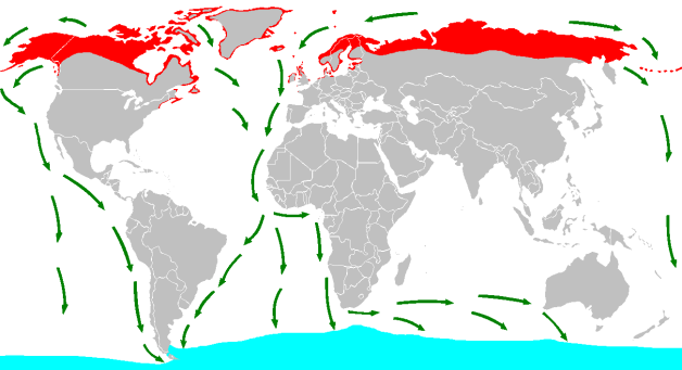 Sterna_paradisaea_distribution_and_migration_map